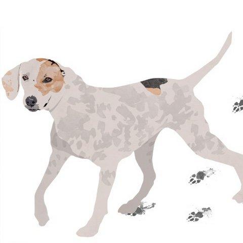 Hope, a cachorrinha, se torna símbolo de campanha Alcaçuz e Amigos de São Francisco