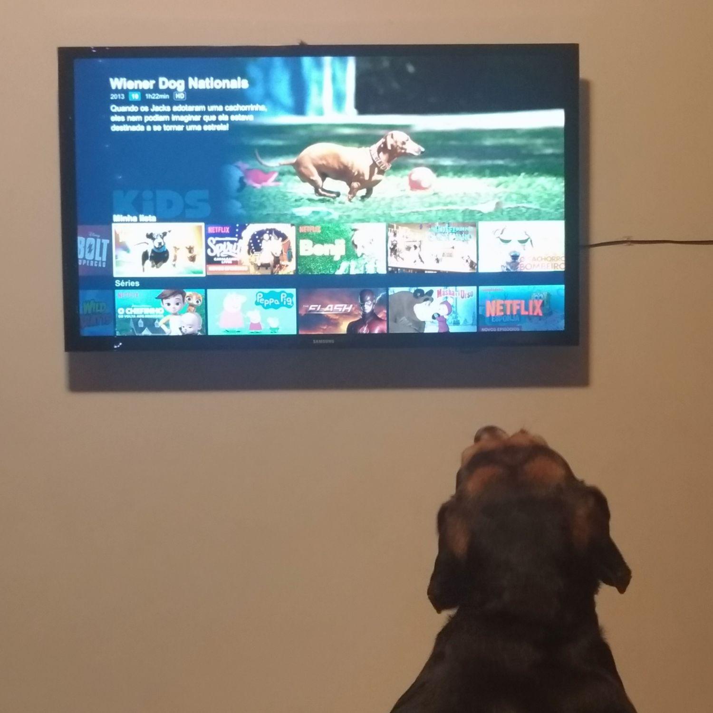 Meu pet e Netflix: Maratonar é para cães e gatos