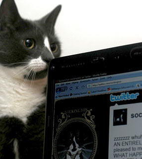 Gato Blogueiro? Sim, existe.