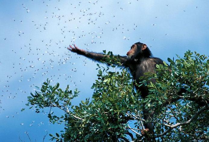 As melhores fotos da National Geographic