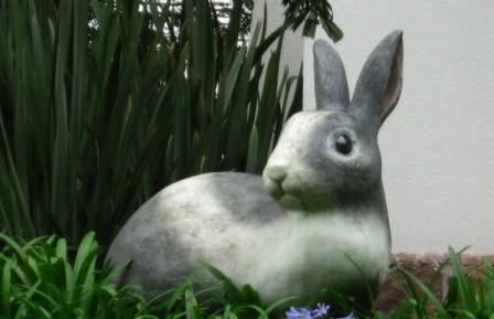 E o coelho do seu Fonseca?