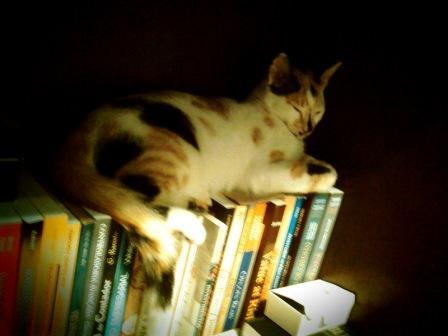 Jujuba e os livros