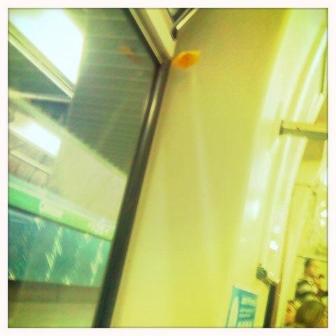 Um flor solitária no metrô...