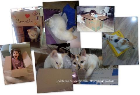 Gatos + Caixas