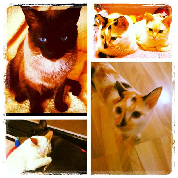 Feliz #CatLoversDay2011 pra vocês!!