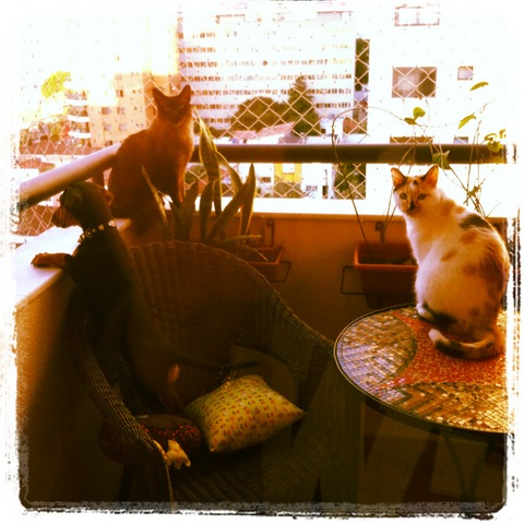 Gatos na rede, cã nas ruas
