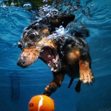 Cães Embaixo da Água