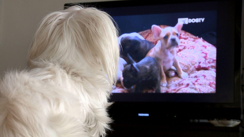 Discovery traz DogTV para o Brasil
